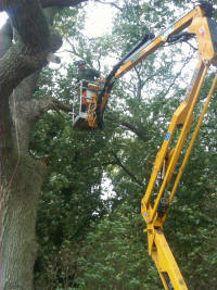 Tree felling and arboriculture services